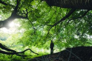 Terpenos: medicina de la naturaleza