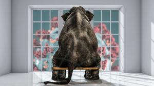 COVID-19 y el elefante en el cuarto