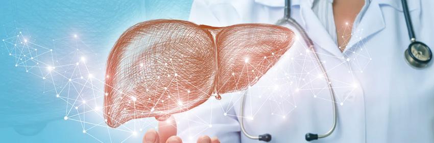 La importancia del hígado